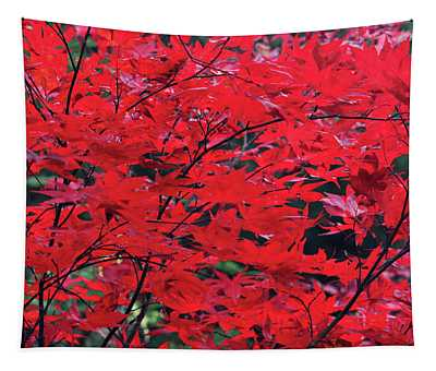 Japanese Maple In The Fall Tapestry