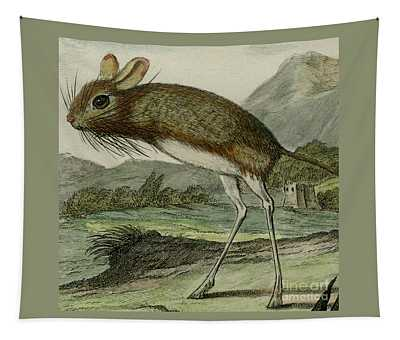 Jerboa, 1780 Colored Engraving By Christian Fritzsch For French Naturalist Comte De Buffon - 3 Tapestry