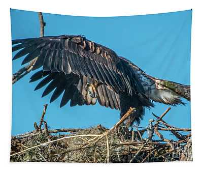 Juvenile Eagle Wing Stretch Tapestry