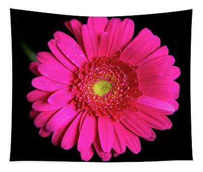 Large Pink Gerber Daisy Tapestry
