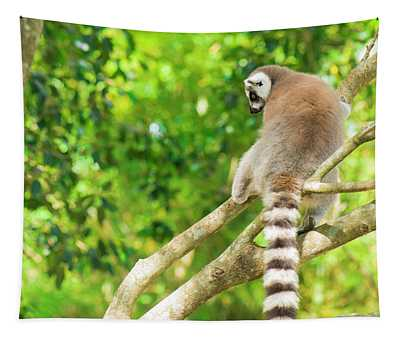 Lemur By Itself In A Tree During The Day. Tapestry