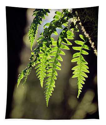 Tapestry featuring the photograph Licorice Fern by Whitney Goodey