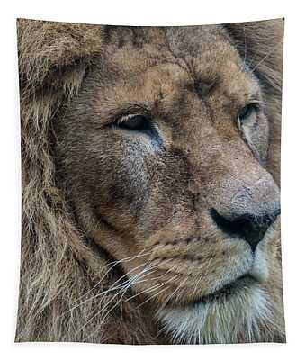Tapestry featuring the photograph Lion by Anjo Ten Kate