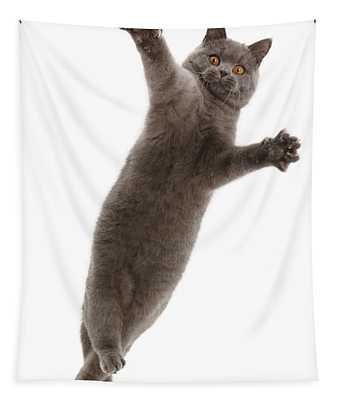 Losing Feline Grace Tapestry