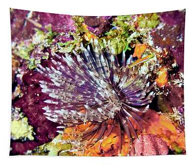 Magnificent Feather Duster Tapestry