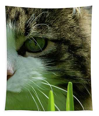 Maine Coon Cat Photo A111018 Tapestry