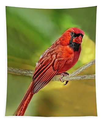 Male Cardinal Headshot  Tapestry