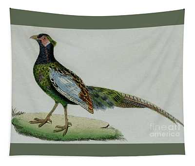 Male Pheasant, 1830 Tinted Engraving For Complete Works Of French Naturalist Comte De Buffon - 3 Tapestry