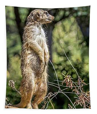 Meerkat Alert Tapestry