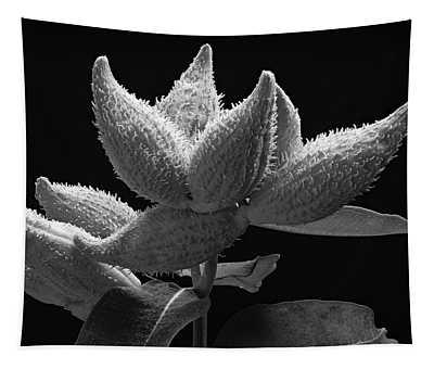Milkweed Pods Tapestry