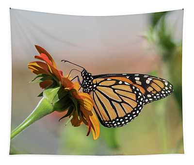 Monarch 2018-28 Tapestry
