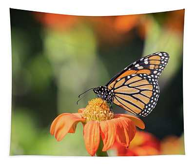 Monarch 2018-29 Tapestry