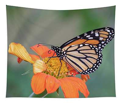 Monarch 2018-30 Tapestry