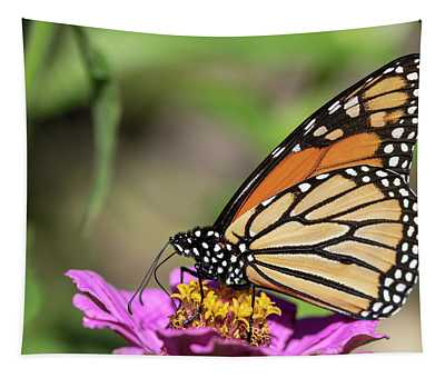 Monarch 2018-32 Tapestry