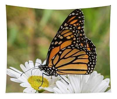 Monarch And Daisies Tapestry