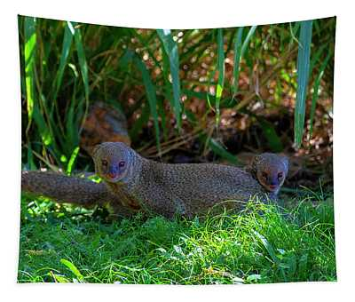 Mongoose Pair Tapestry