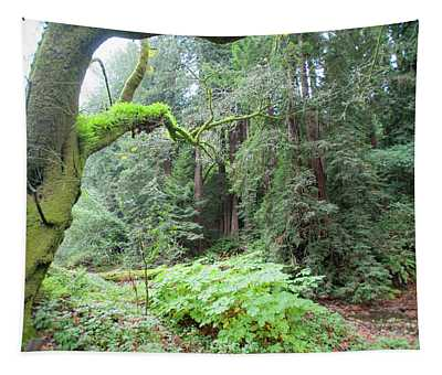 Moss In Muir Woods Tapestry