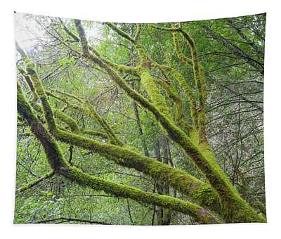 Moss On Redwoods Tapestry