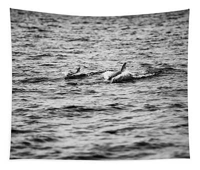 Mother Dolphin And Calf Swimming In Moreton Bay. Black And White Tapestry