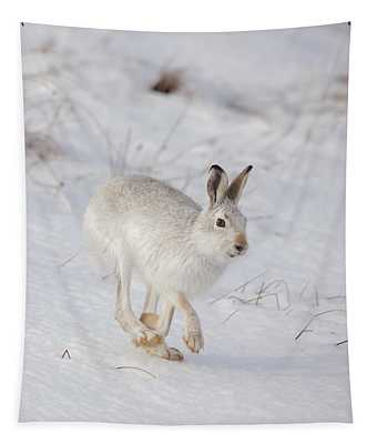 Mountain Hare Hopping Along Tapestry