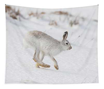 Mountain Hare Hops By Tapestry