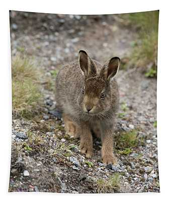 Mountain Hare Leveret Feeding Tapestry