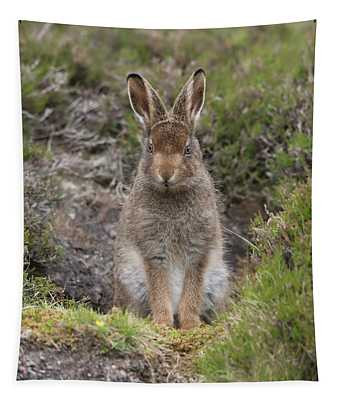 Mountain Hare Leveret In Form Tapestry