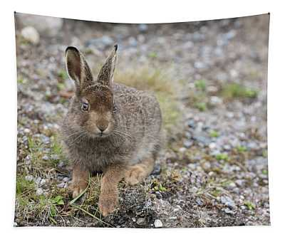 Mountain Hare Leveret On Gravel Tapestry