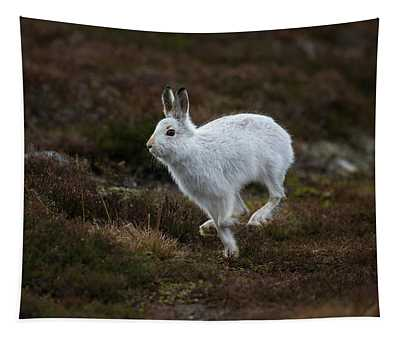 Mountain Hare Scampers Past Tapestry