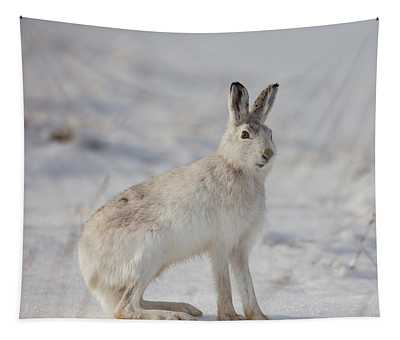 Mountain Hare Sits In Snow Tapestry