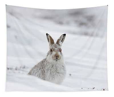 Mountain Hare With Snow On Its Nose Tapestry