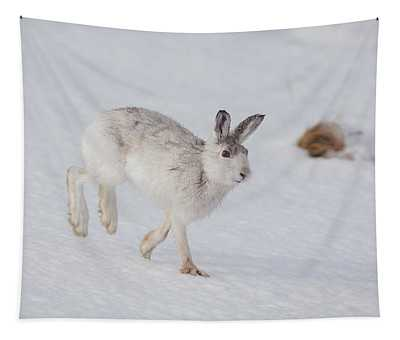 Mountain Hare With Wet Fur Tapestry