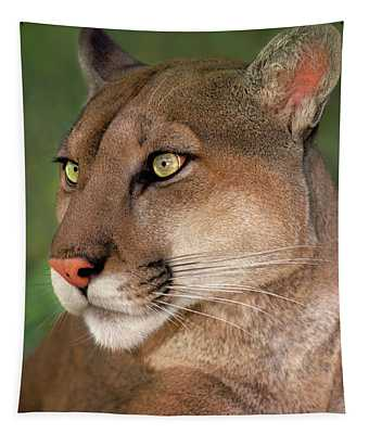 Mountain Lion Portrait Wildlife Rescue Tapestry