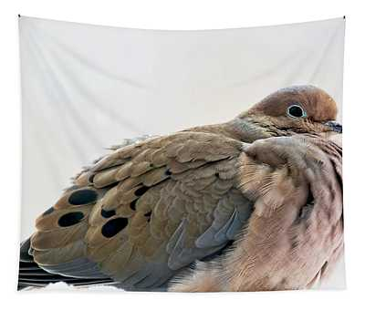 Mourning Dove In Winter Tapestry
