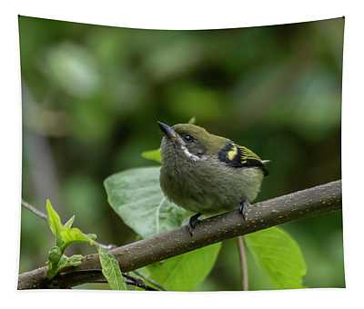 Moustached Tinkerbird Tapestry