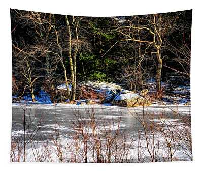 Mud Pond Frozen Tapestry