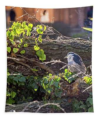 Night Heron At The Palace Revisited Tapestry