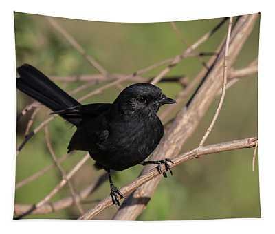 Northern Black Flycatcher Tapestry