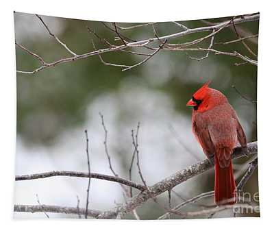Northern Cardinal In Late Fall Tapestry