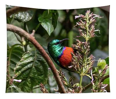 Northern Double-collared Sunbird Tapestry