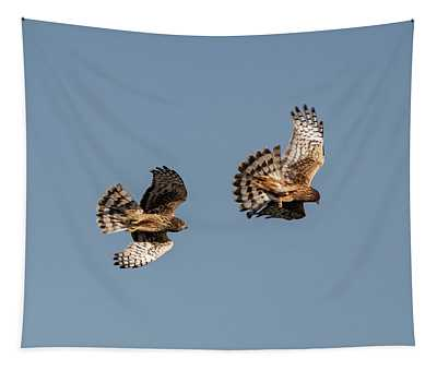Northern Harriers 7 Tapestry