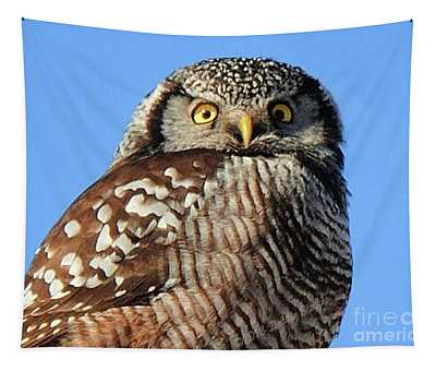 Northern Hawk-owl Tapestry