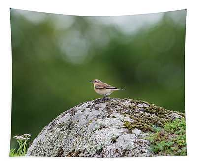 Northern Wheatear Perching On A Stone Tapestry