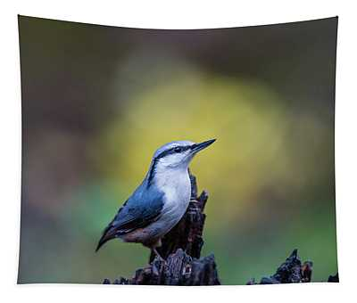 Nuthatch On The Spot Tapestry