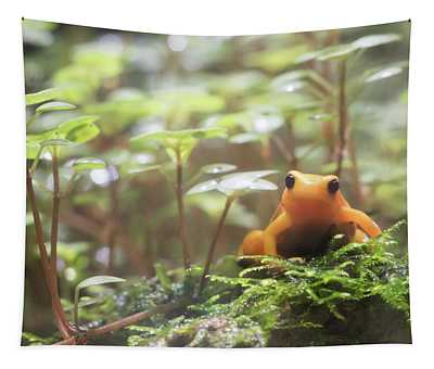 Tapestry featuring the photograph Orange Frog. by Anjo Ten Kate