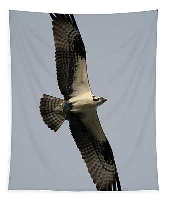 Osprey With Fish Tapestry