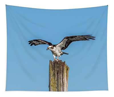 Osprey With Wings Spread Tapestry