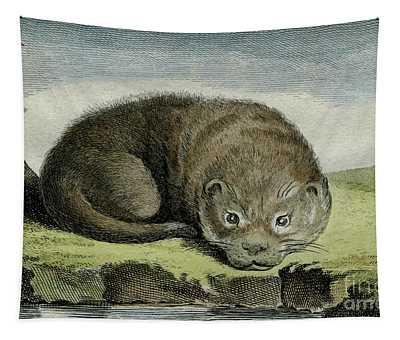 Otter - 1780 Engraving By Wildlife Artist De Seve For French Naturalist Comte De Buffon- 3 Tapestry