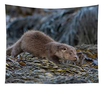 Otter Cub On The Prowl Tapestry