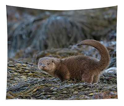 Otter Cub Tail Up Tapestry